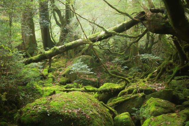ぬ文ちゃんさんによる写真ACからの写真/グリーンツーリズム