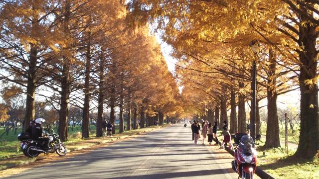 しゅうじくんさんによる写真ACからの写真/滋賀県サイクルツーリズム