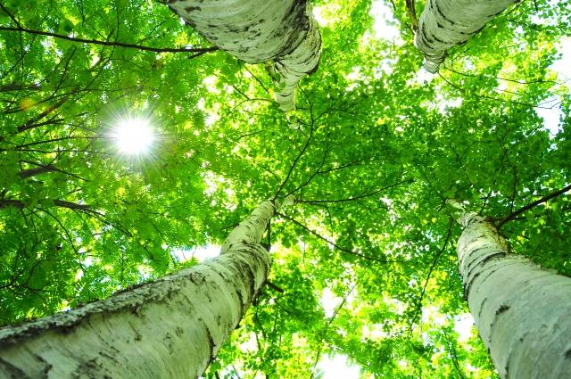 するめいぬさんによる写真ACからの写真/グリーンツーリズム