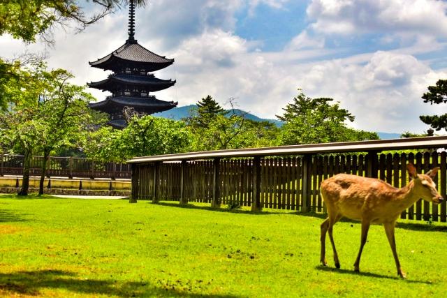 ぴょんぴょんうさぎさんによる写真ACからの写真/奈良県